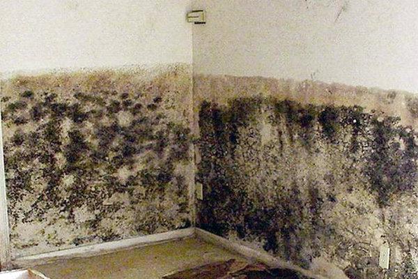 Чем удалить черную плесень со стен